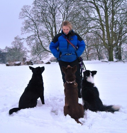 hannah and dogs